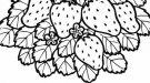 Fresas en primavera