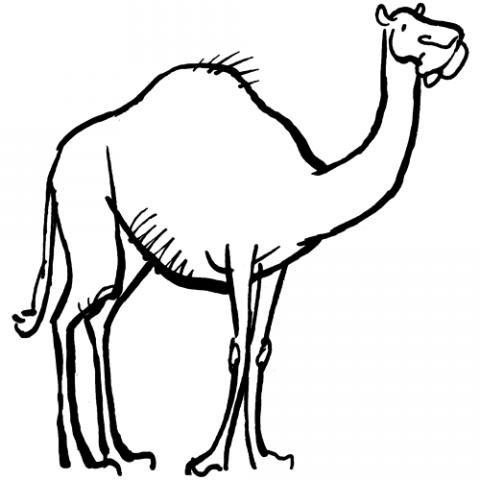 Camello para colorear. Dibujos de animales para niños