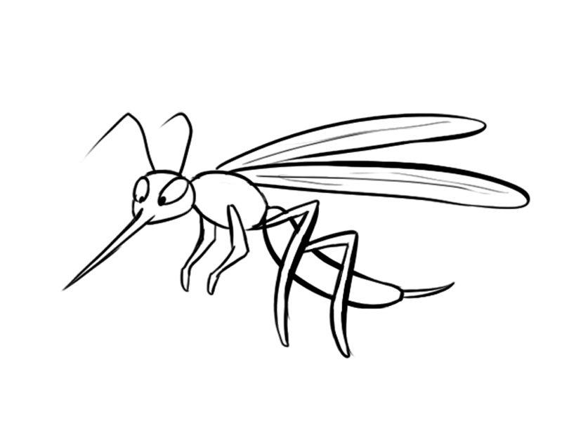 Dibujos De Insectos Para Colorear Para Ninos: Dibujo De Un Mosquito, Imágenes De Insectos Para Colorear