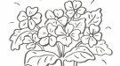 Dibujo de un ramo de flores para colorear con niños
