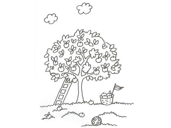 Dibujo de un rbol con manzanas para colorear con ni os for Las partes de un arbol en ingles