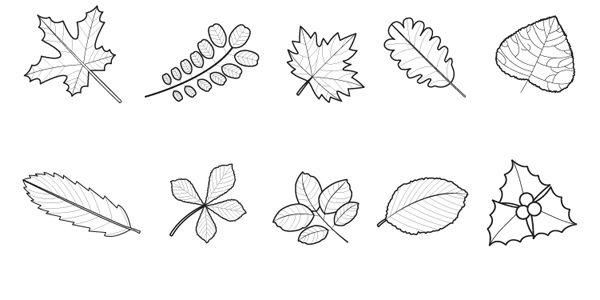 19767-4-hojas-de-arboles- ...