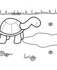 Tortuga presumida: dibujo para colorear e imprimir
