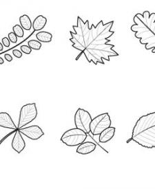 Hojas de árboles: dibujo para colorear e imprimir