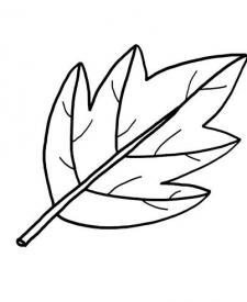 Una hoja de árbol: dibujo para colorear e imprimir