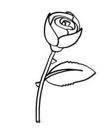 Rosa: dibujo para colorear e imprimir