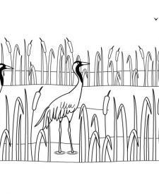 Grullas: dibujo para imprimir y colorear