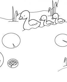 Nenúfares: dibujo para colorear e imprimir