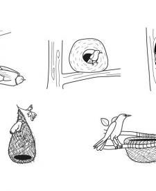 Nidos: dibujo para colorear e imprimir