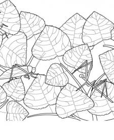 Camuflaje: dibujo para colorear e imprimir