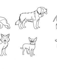 Razas de perros: dibujo para colorear e imprimir