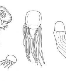 Medusas: dibujo para colorear e imprimir