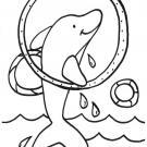 Delfin y anillos: dibujo para colorear e imprimir