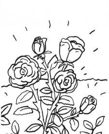 Rosas: dibujo para colorear e imprimir