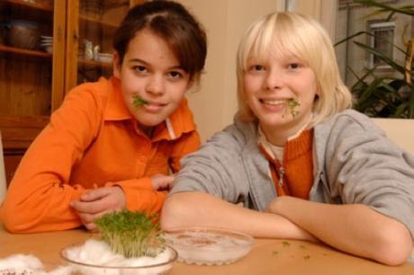 Cultivar berro sin tierra: experimento para niños