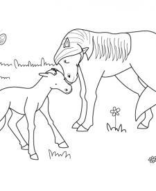 Un potro con su mamá: dibujo para colorear e imprimir