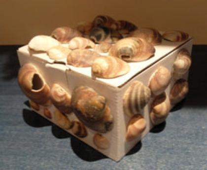 Caja de conchas