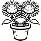 Dibujos de girasoles para colorear por los niños. Imágenes de flores