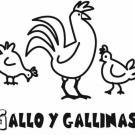 Imagen de gallo y gallinas para colorear