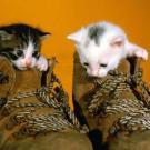 Gatos con botas, tarjeta virtual de animales