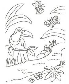 Dibujo de un tucán de la selva para pintar con niños