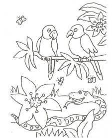 Dibujo de una serpiente y pájaros para colorear con niños