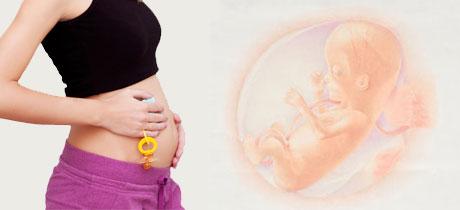 como es el bebe a las 14 semanas de gestacion