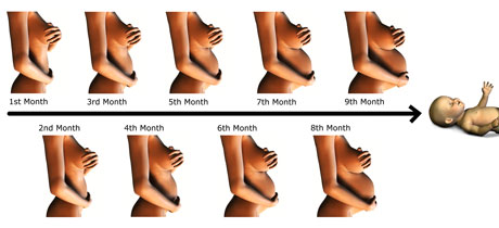 Cómo crece el abdomen durante el embarazo