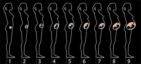 desarrollo del bebé semana a semana