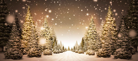 El planeta de los rboles de navidad libro para ni os for Como crecen los arboles para ninos
