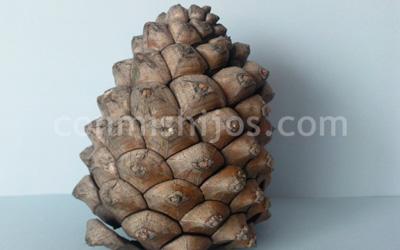 Arbol de navidad hecho con pinas de pino