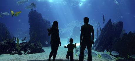 Aquarium sea life para ni os en m laga for Aquarium torremolinos